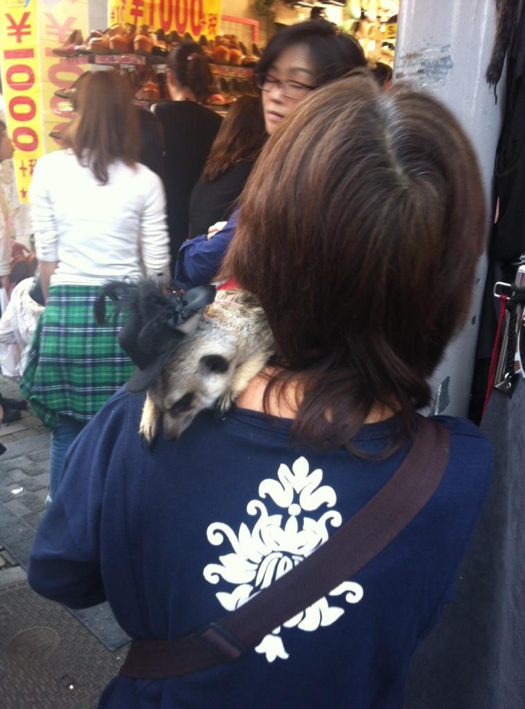 Meerkats in Tokyo